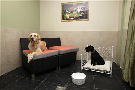 h tel pour chien paris le palace canin actual dog voyage insolite. Black Bedroom Furniture Sets. Home Design Ideas