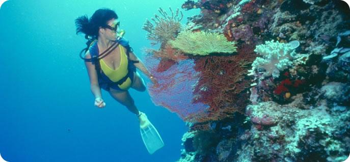 Dossier éco tourisme aux Bahamas