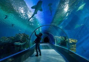 copenhague accueille le plus grand aquarium d europe voyage insolite