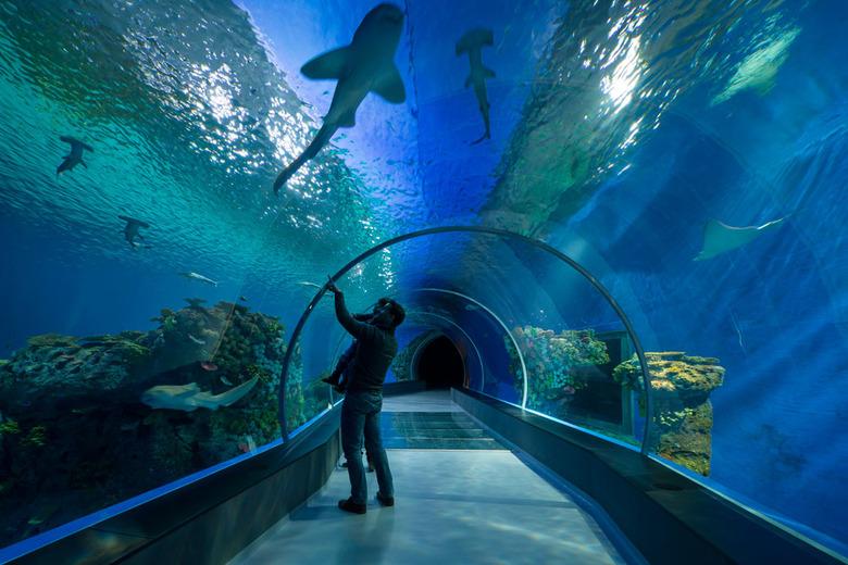 Blue-Planet-Aquarium3