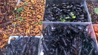 insectes_thailande