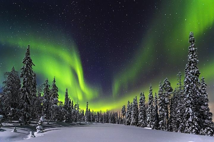 Forest lights - 2014-03-23_240517_sense-of-place.jpg