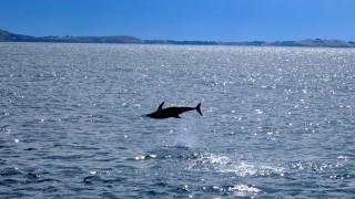 jump dauphin