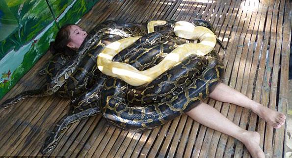 Terrifiant : le massage aux pythons (Philippines)