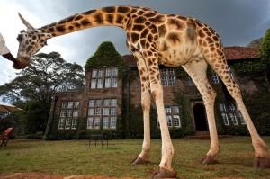 Dormir avec les girafes au Kenya
