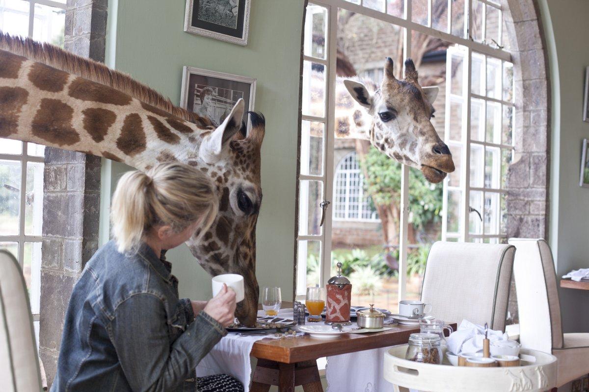 hotel_girafes_kenya3