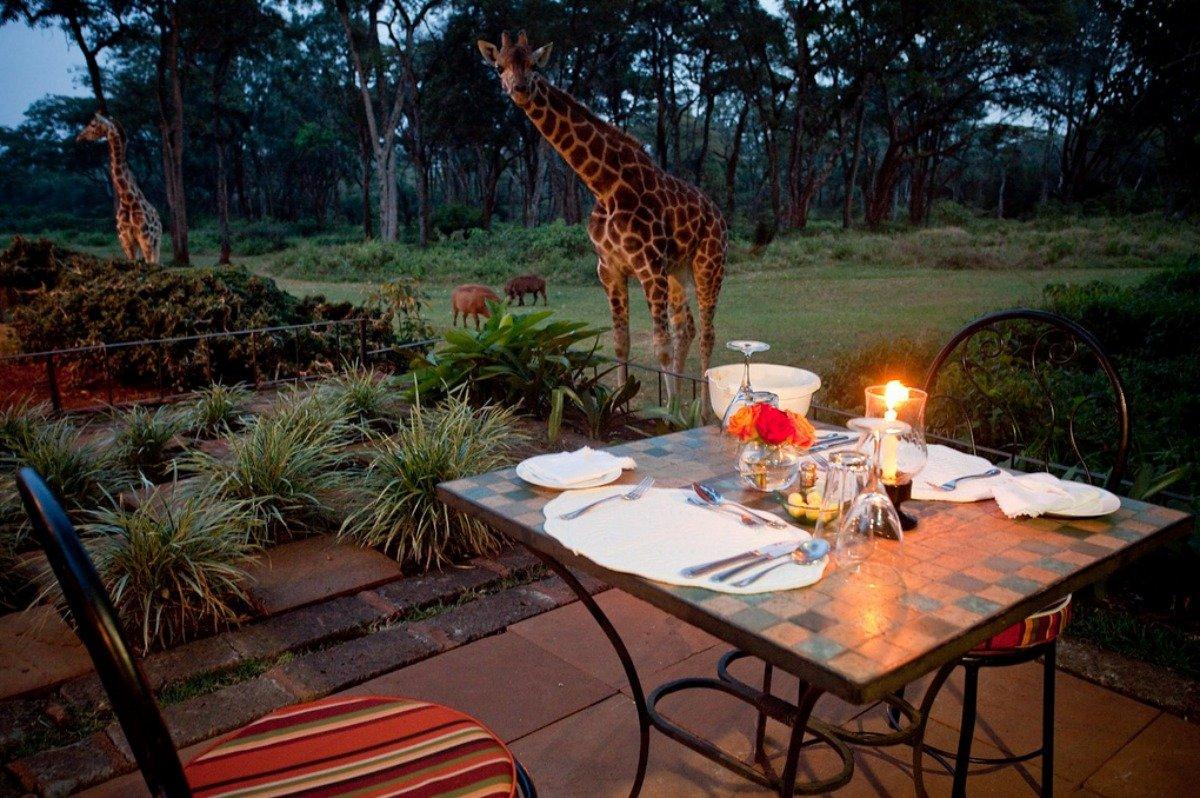 hotel_girafes_kenya4