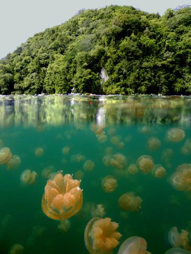 lac_aux_meduses