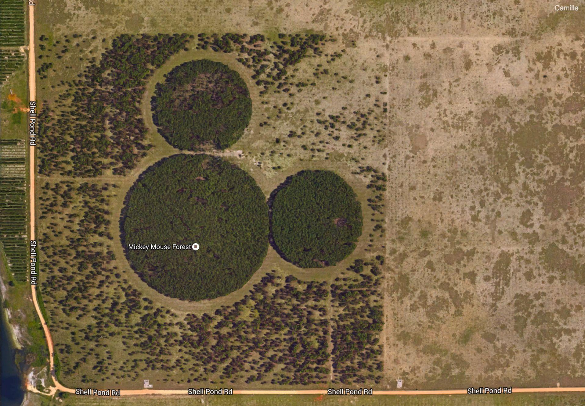 La forêt Mickey près d'Orlando en Floride