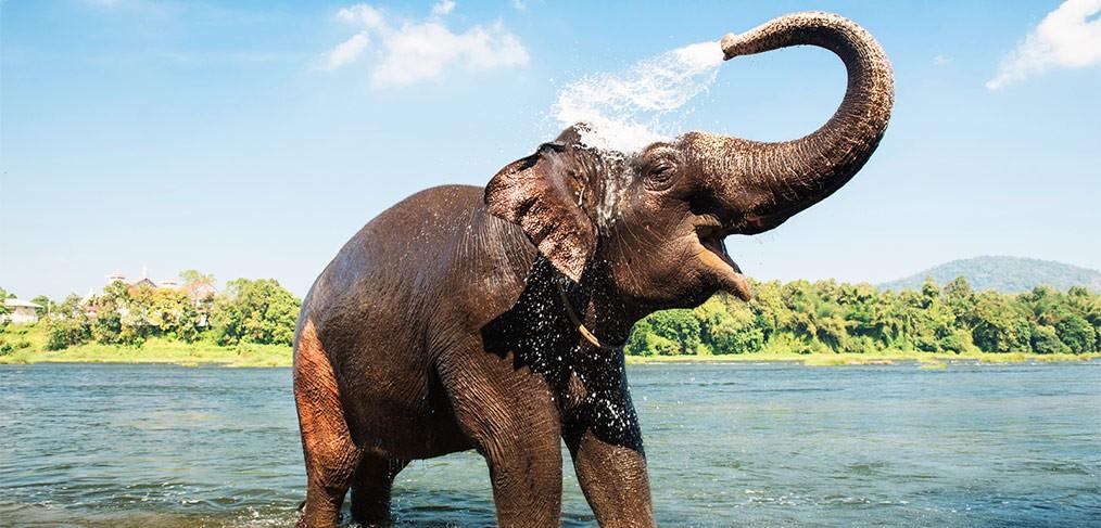 cambodge elephant