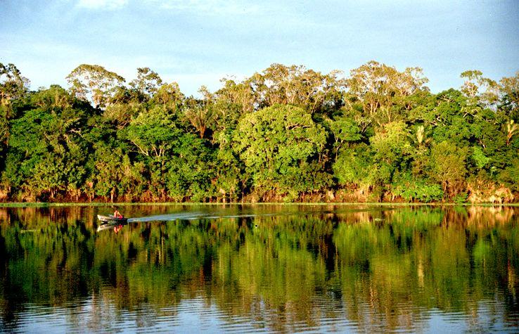 Fôret amazonienne