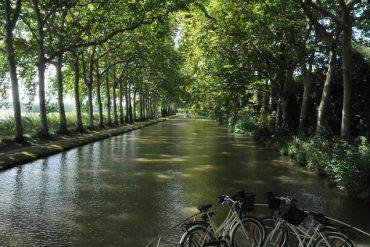canal du midi et platanes