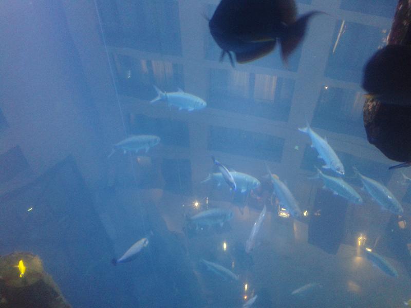 Mitte poissons qui volent Berlin
