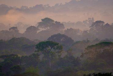 canopée en Amazonie