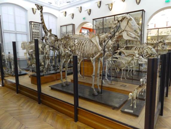 Musée Fragonard Maison Alfort
