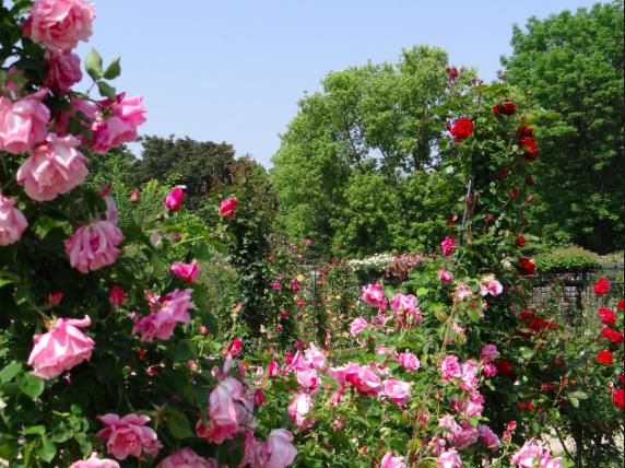 La Roseraie à l'Hay les Roses