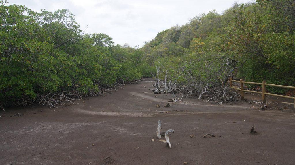 Mangrove marée basse baie du trésor