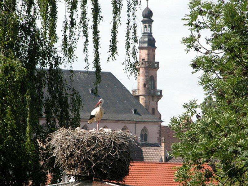 Top 10 de l'Alsace insolite en famille
