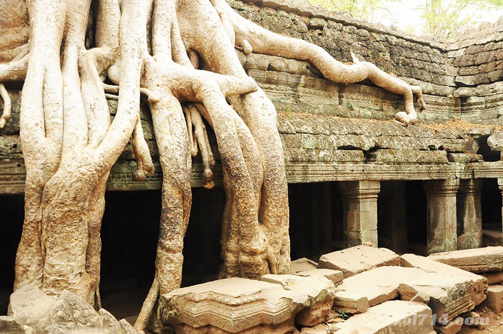 temple TA PROHM angkor
