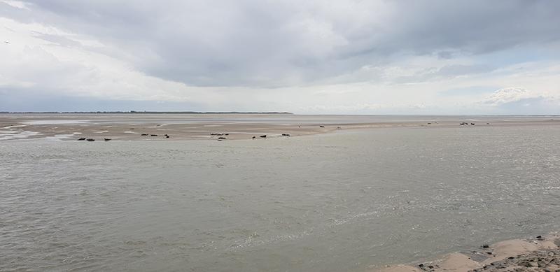 phoques baie de somme phare Berk
