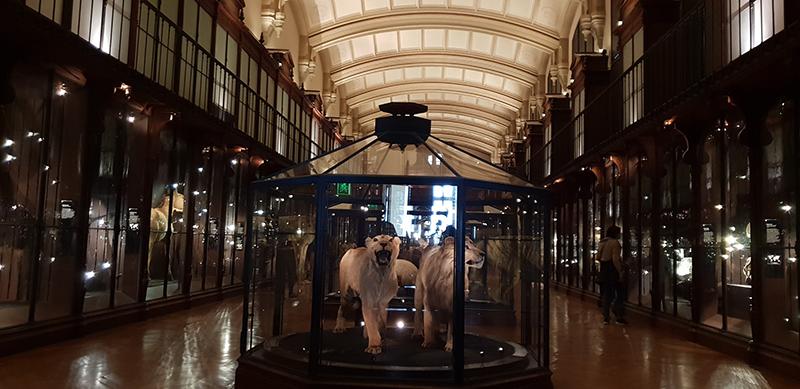galerie animaux disparus